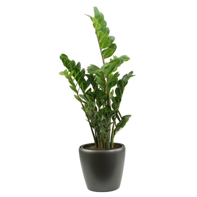 Plantscape Interiors